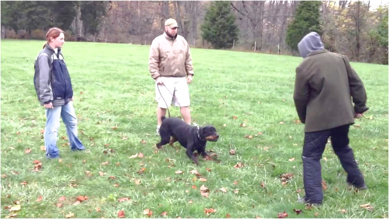 personal protection dog training uk