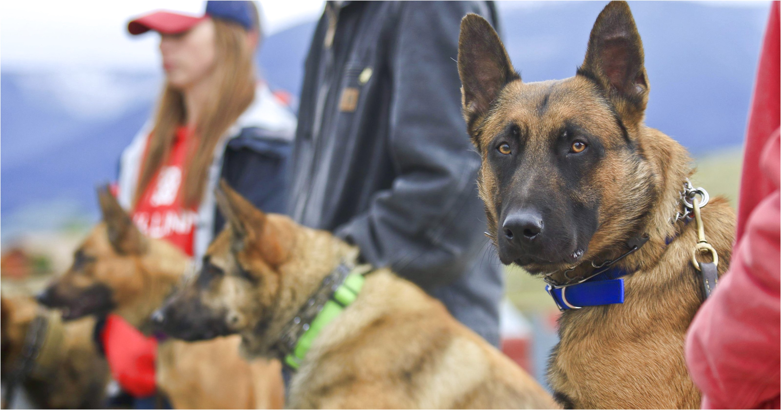 personal protection dog training wyoming