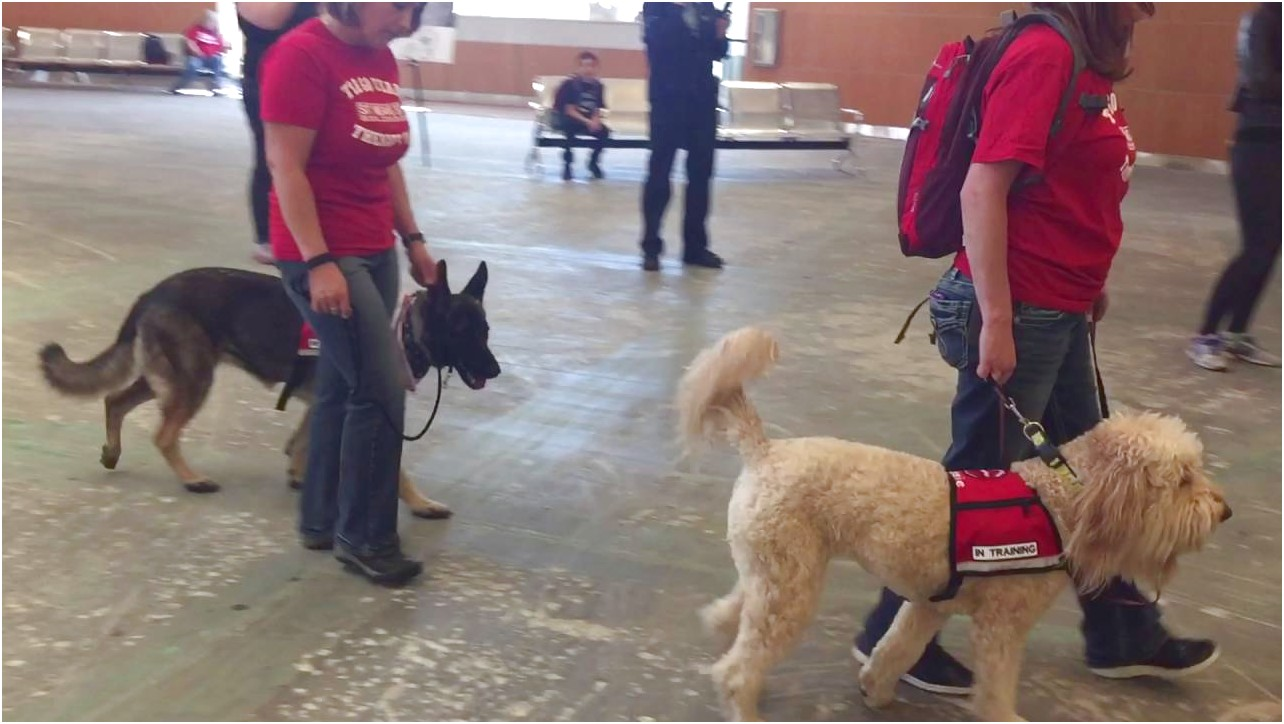 therapy dog training boise