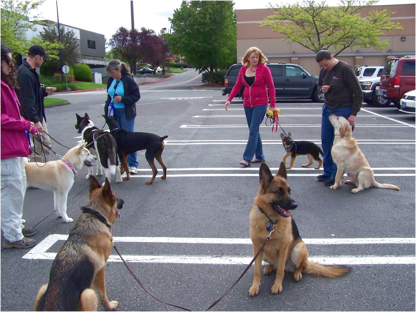 therapy dog training schools near me