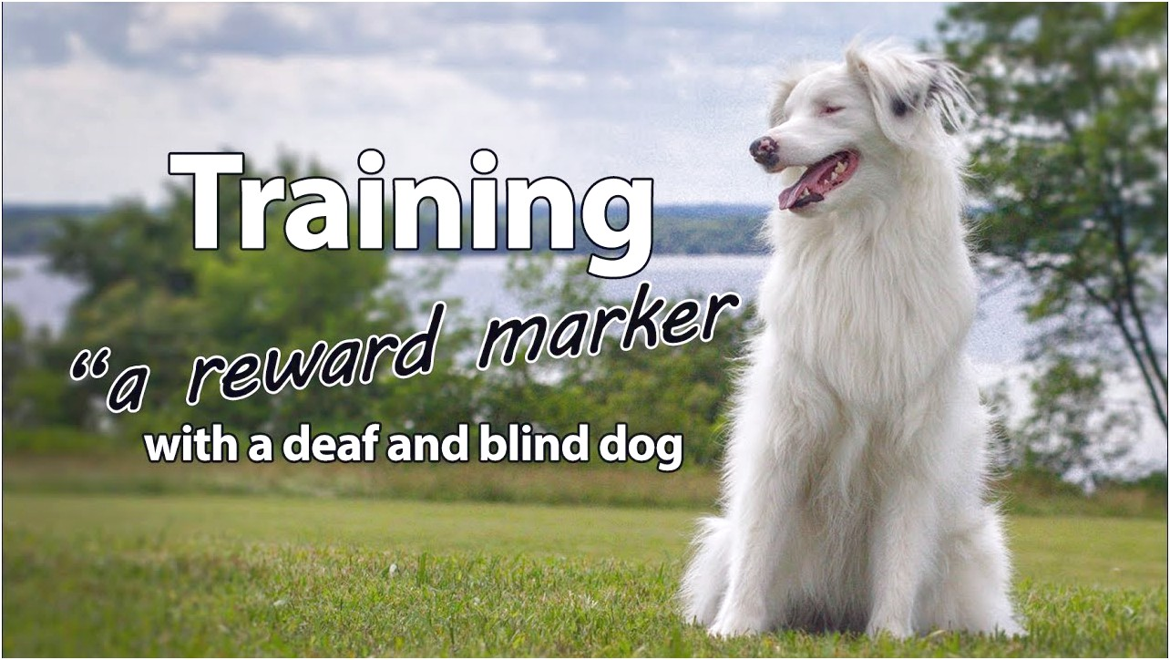 training blind and deaf dog