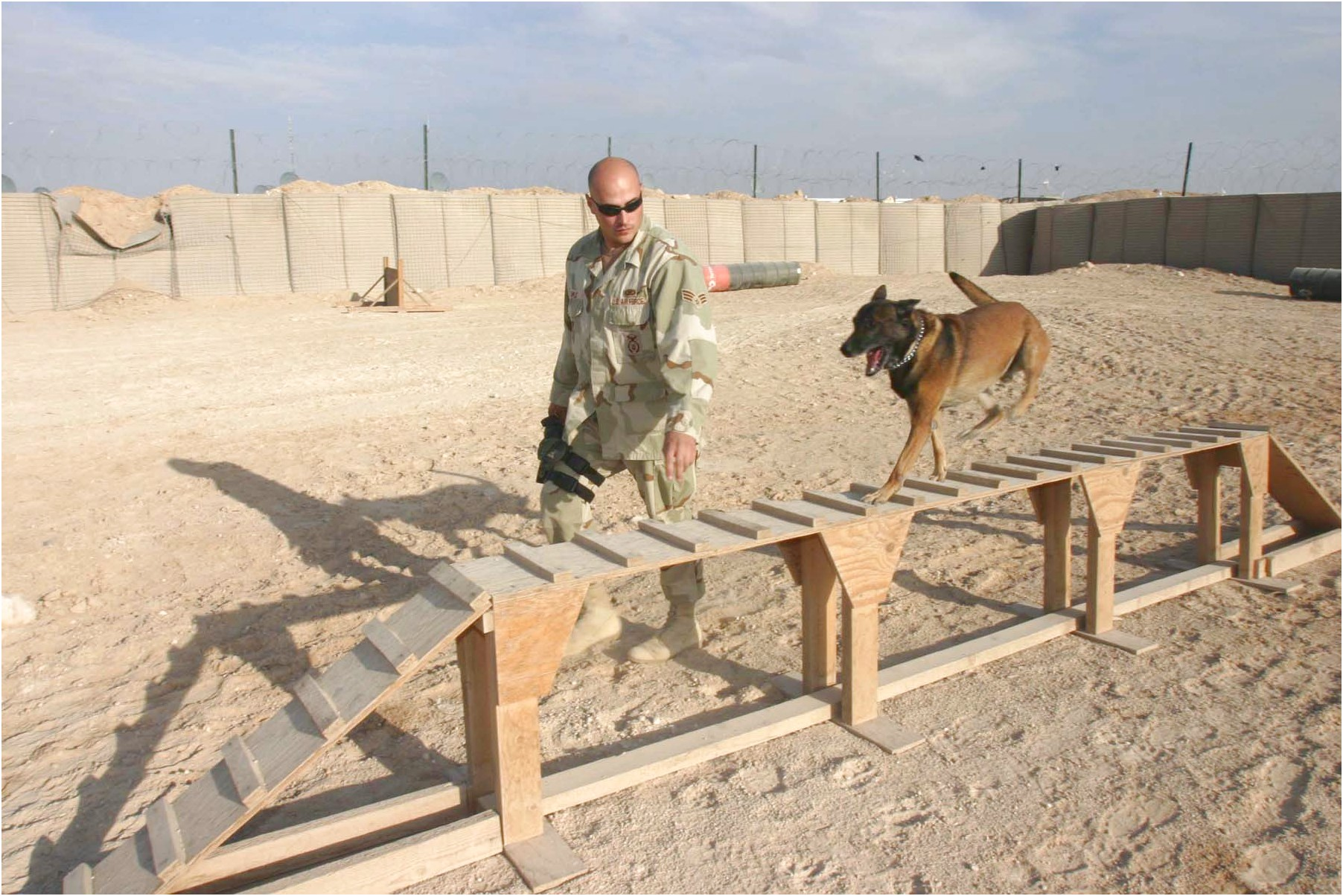 what are military dogs trained to do