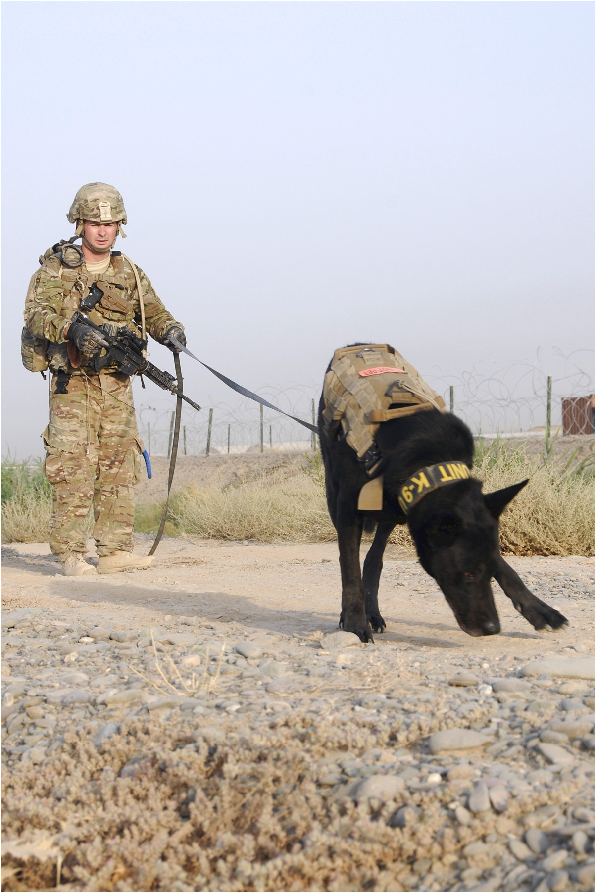 what language are military dogs trained in