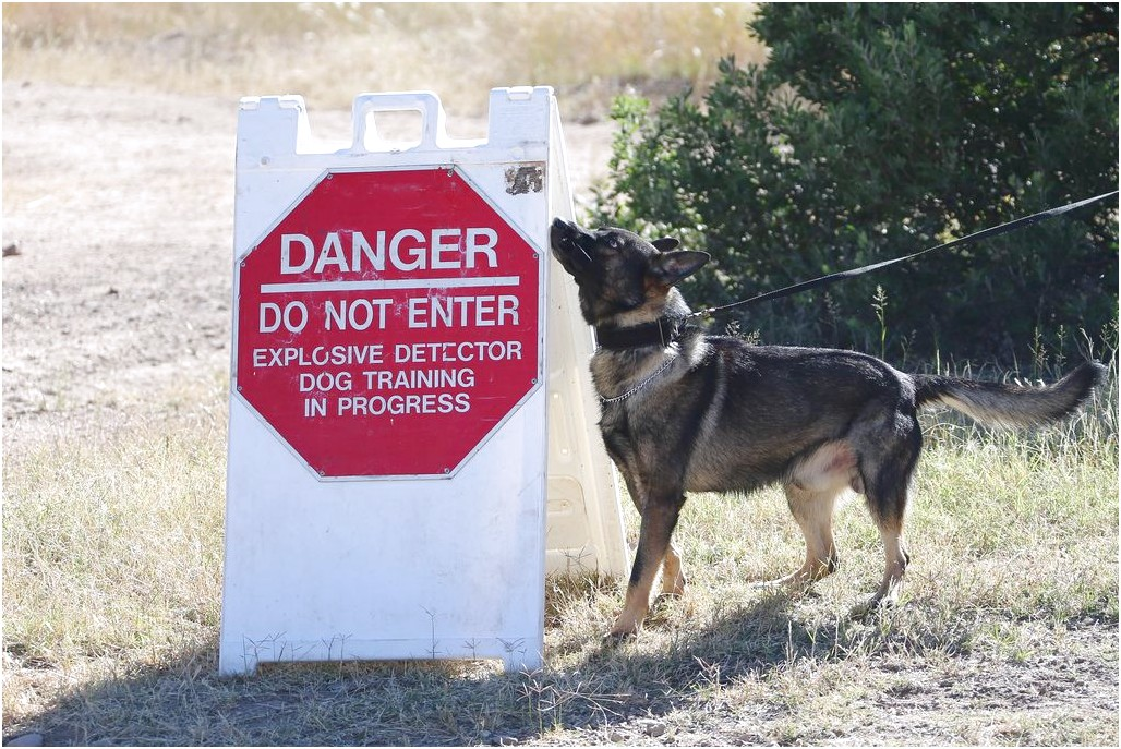 where are military working dogs trained