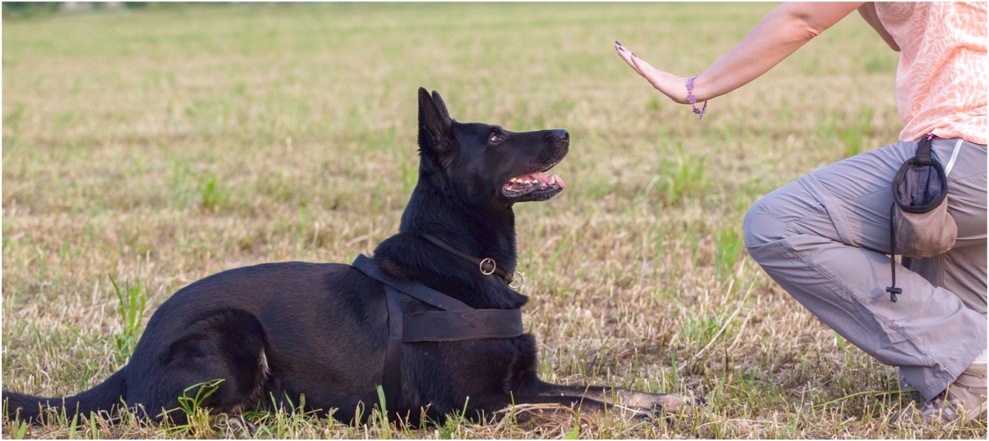 working dog training classes near me